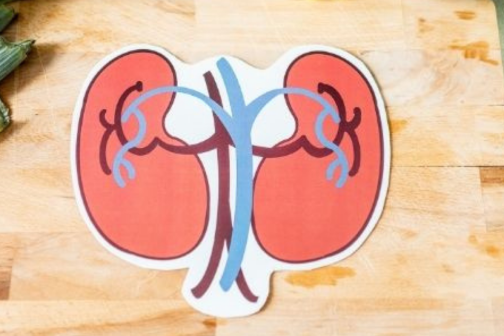 Effective Supplements to Improve Your Kidney Health